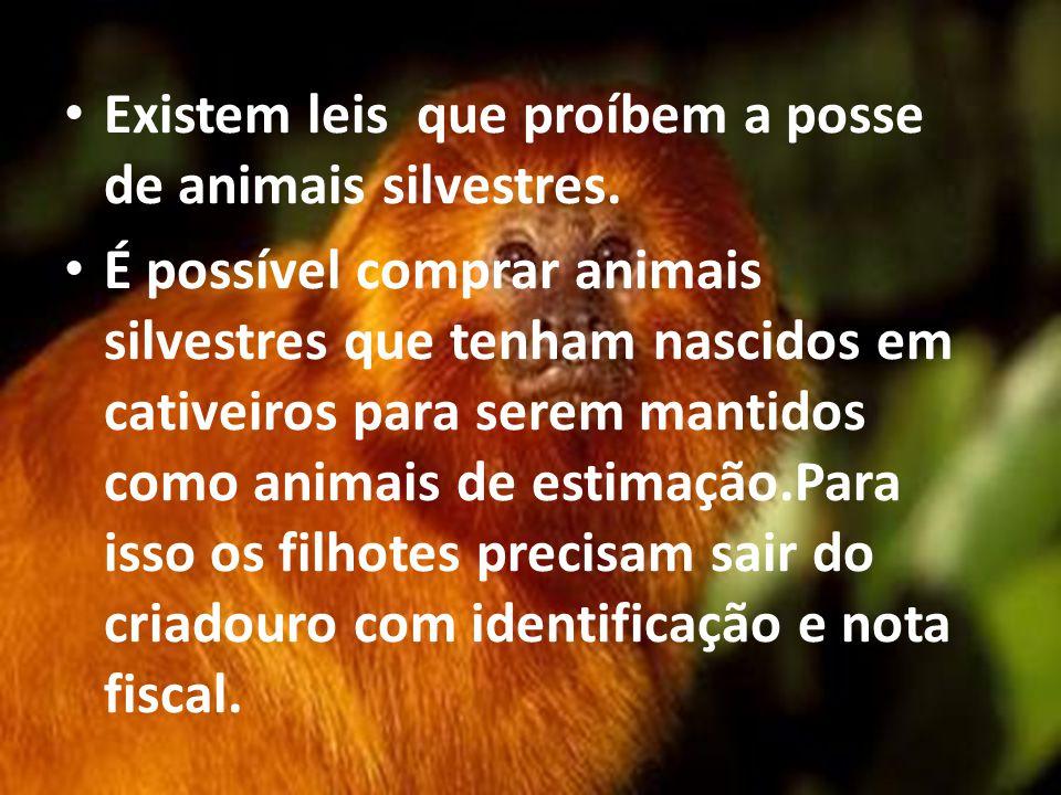 Existem leis que proíbem a posse de animais silvestres.