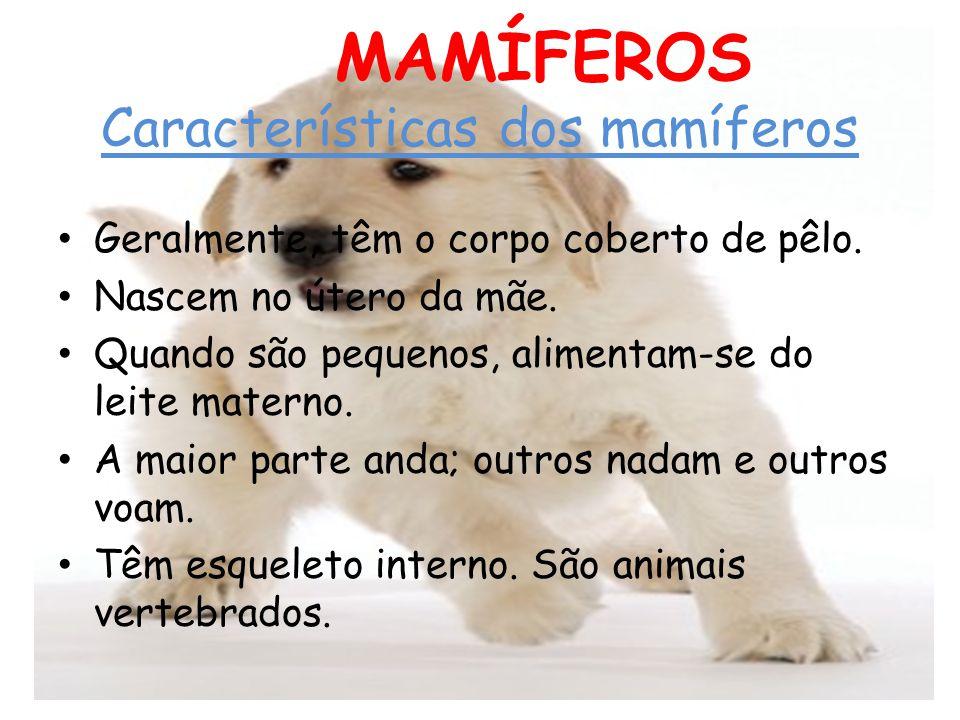 OS MAMÍFEROS Características dos mamíferos