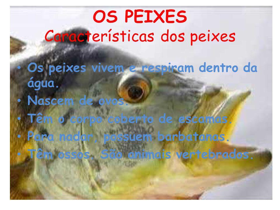 OS PEIXES Características dos peixes