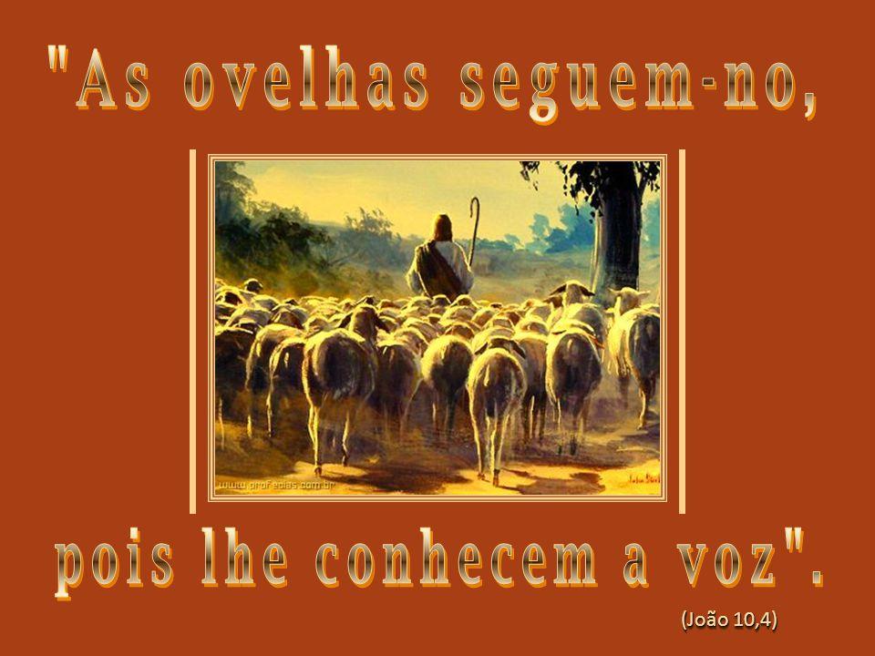 As ovelhas seguem-no, pois lhe conhecem a voz .