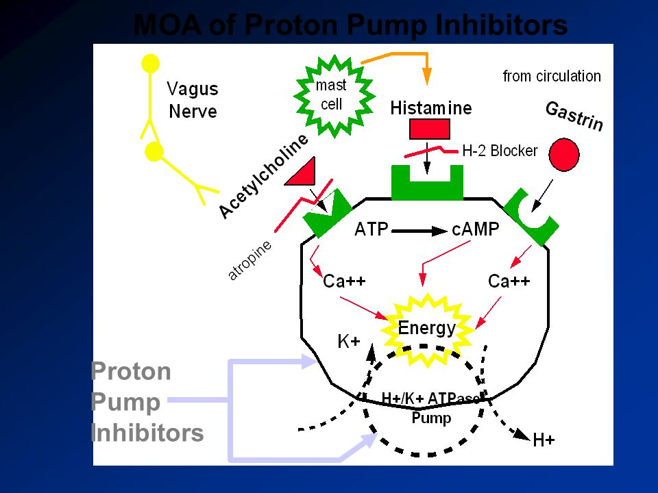 MOA of Proton Pump Inhibitors