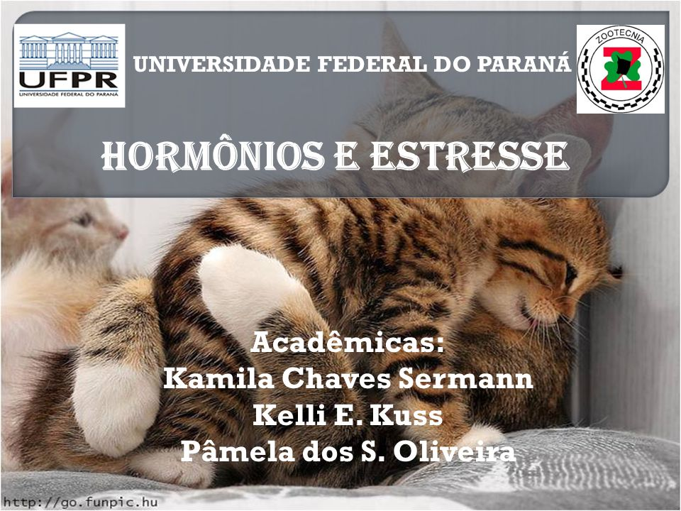 HORMÔNIOS E ESTRESSE Acadêmicas: Kamila Chaves Sermann Kelli E. Kuss