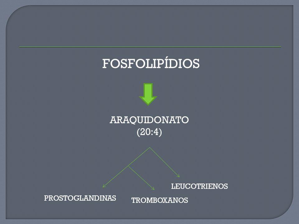 FOSFOLIPÍDIOS ARAQUIDONATO (20:4) LEUCOTRIENOS PROSTOGLANDINAS
