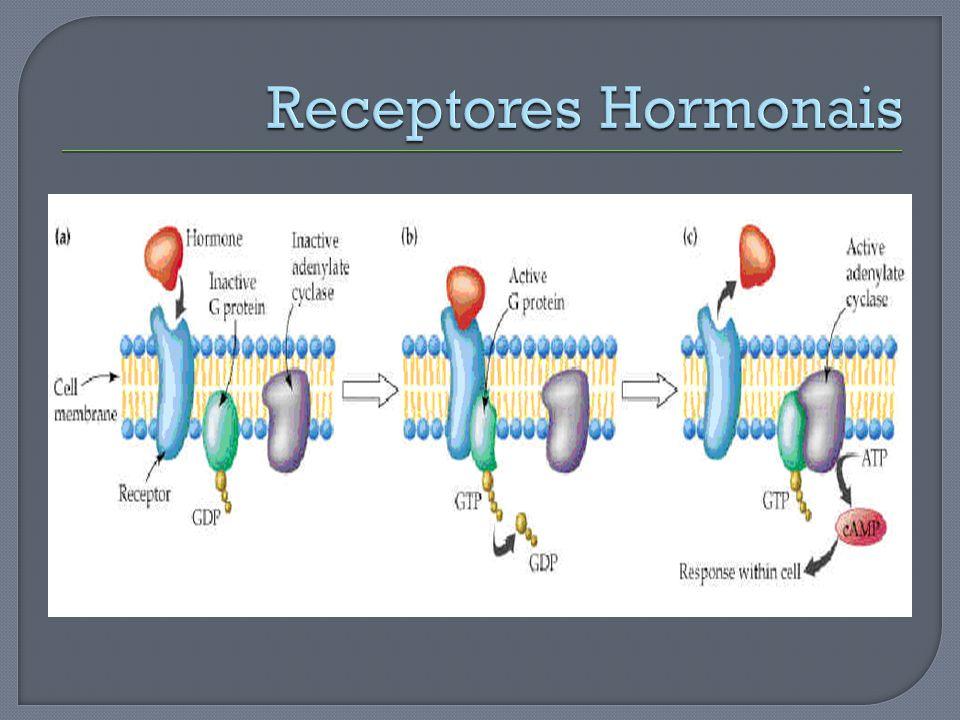 Receptores Hormonais