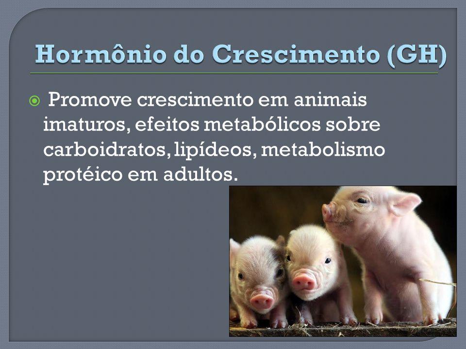 Hormônio do Crescimento (GH)