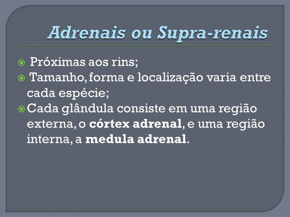 Adrenais ou Supra-renais
