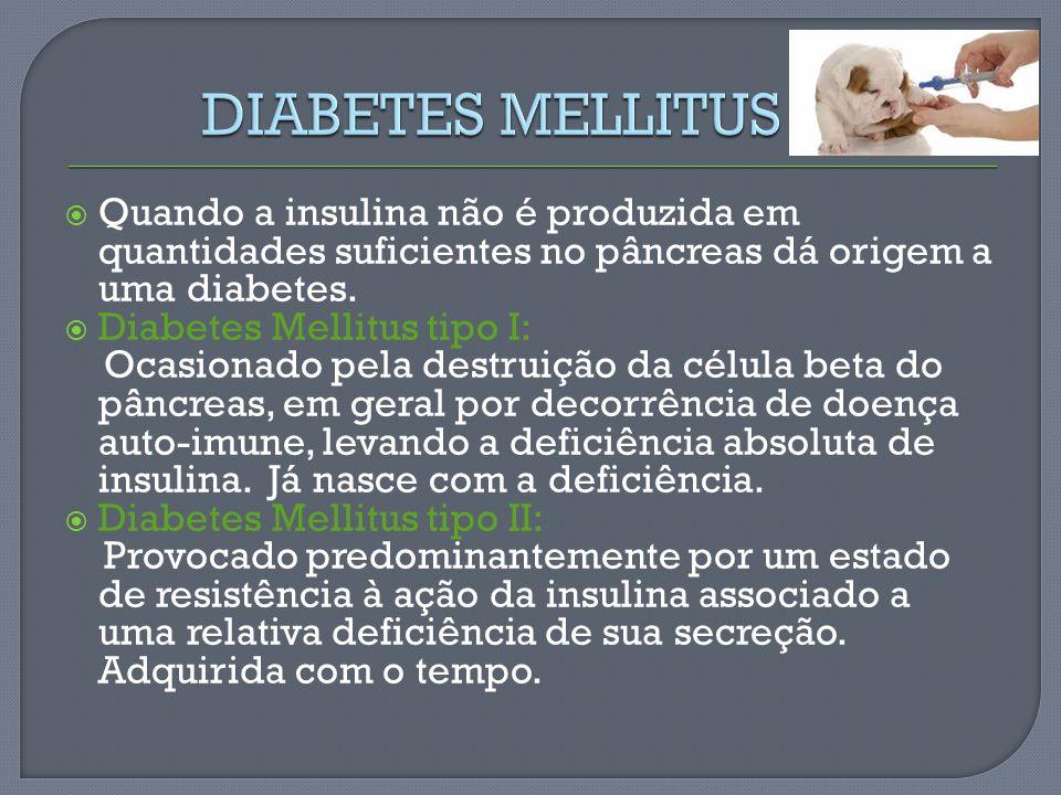 DIABETES MELLITUS Quando a insulina não é produzida em quantidades suficientes no pâncreas dá origem a uma diabetes.