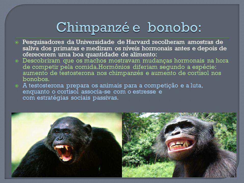 Chimpanzé e bonobo: