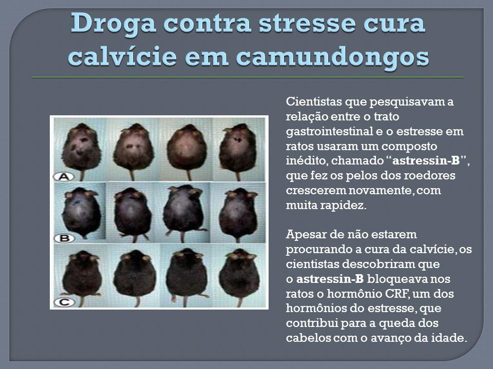 Droga contra stresse cura calvície em camundongos