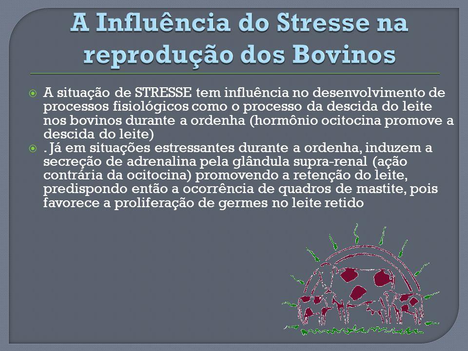 A Influência do Stresse na reprodução dos Bovinos