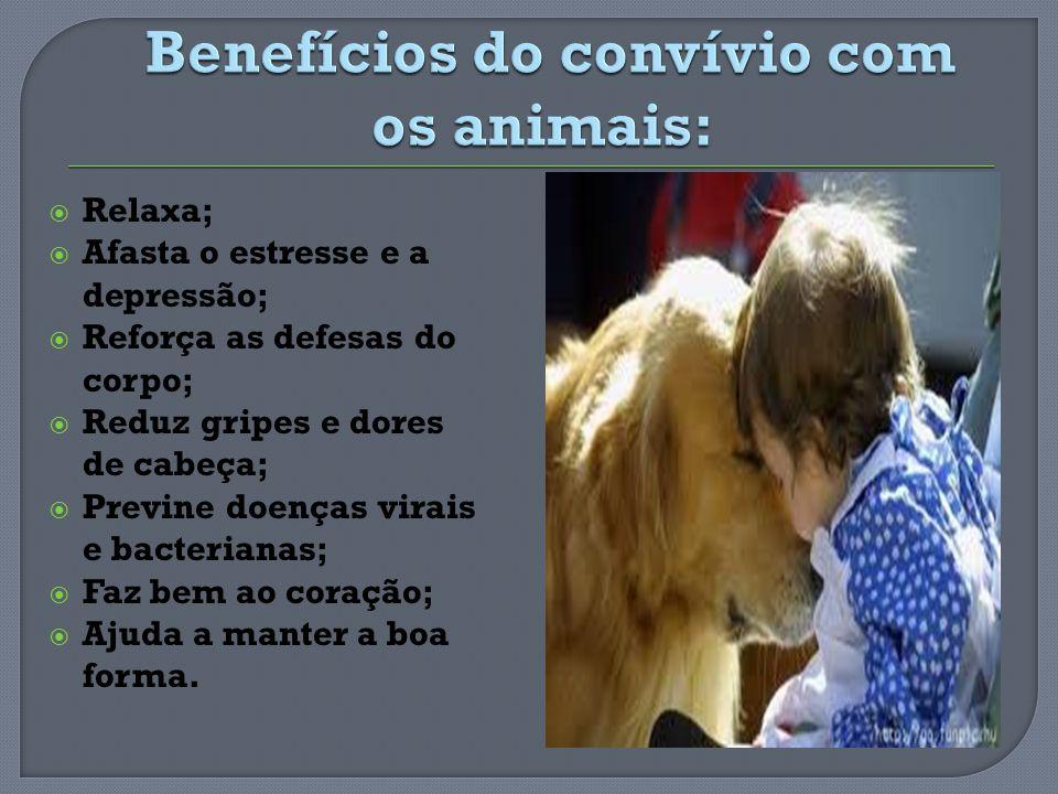 Benefícios do convívio com os animais: