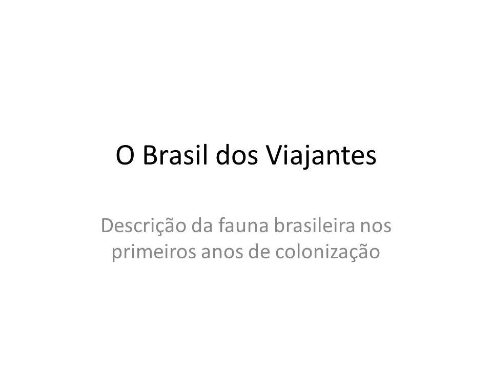 Descrição da fauna brasileira nos primeiros anos de colonização