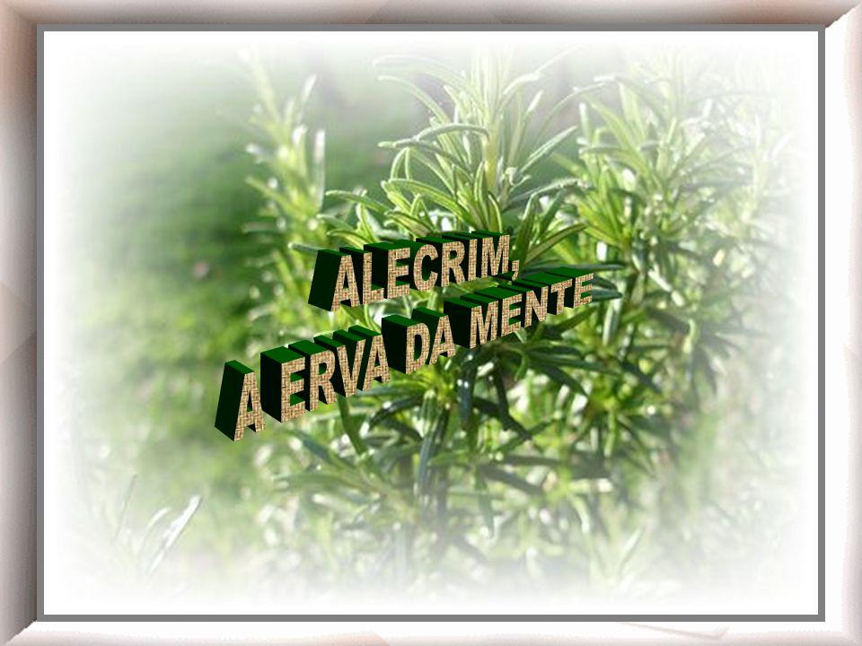 Chá de alecrim! ALECRIM, A ERVA DA MENTE Alecrim