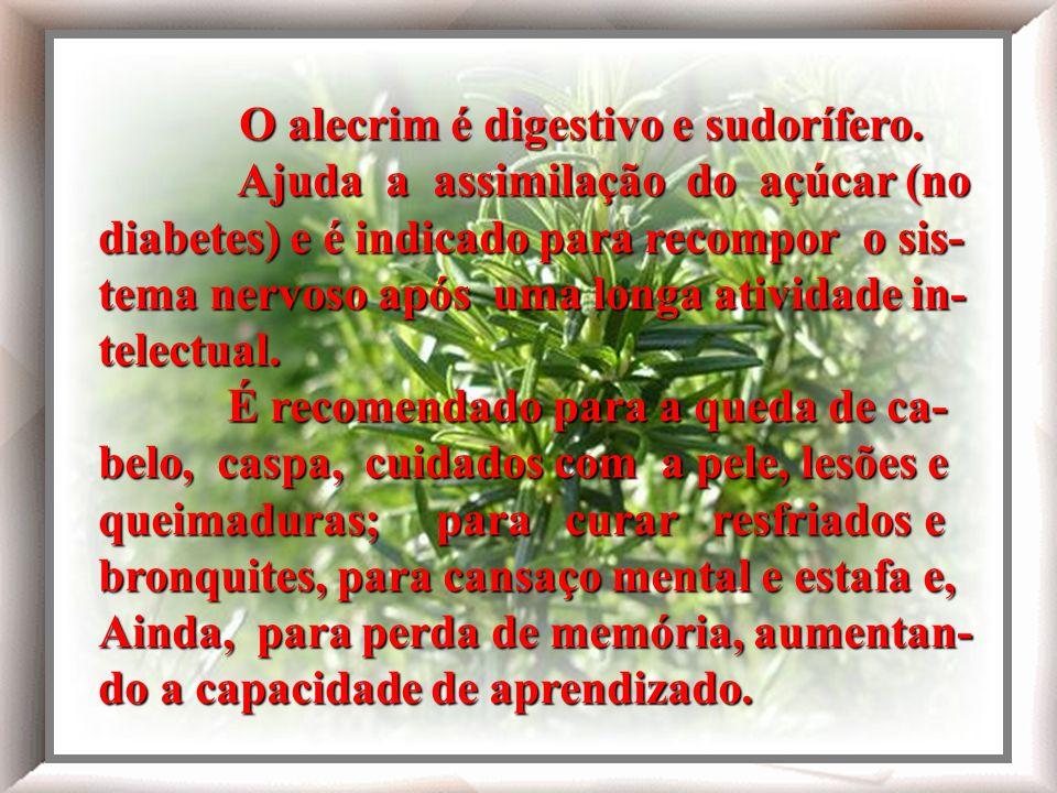 O alecrim é digestivo e sudorífero