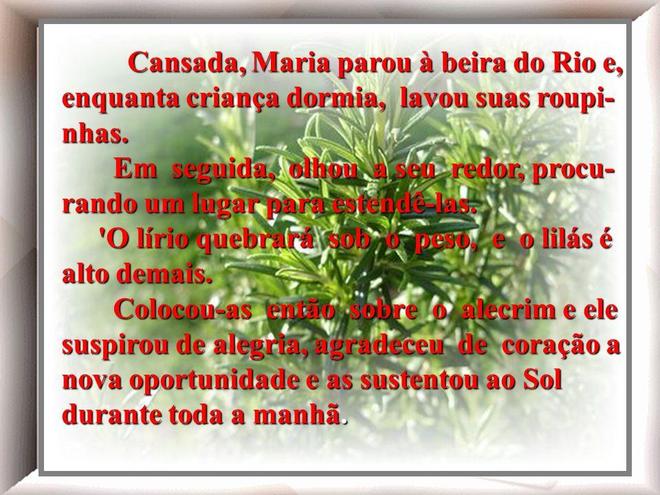 Cansada, Maria parou à beira do Rio e, enquanta criança dormia, lavou suas roupi- nhas.