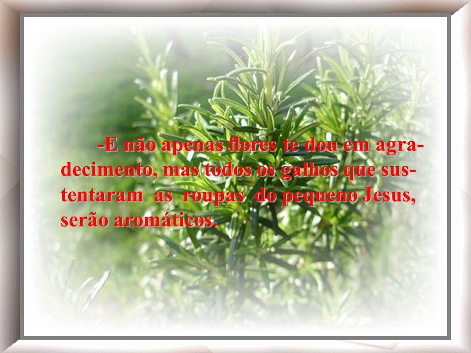 -E não apenas flores te dou em agra- decimento, mas todos os galhos que sus- tentaram as roupas do pequeno Jesus, serão aromáticos.
