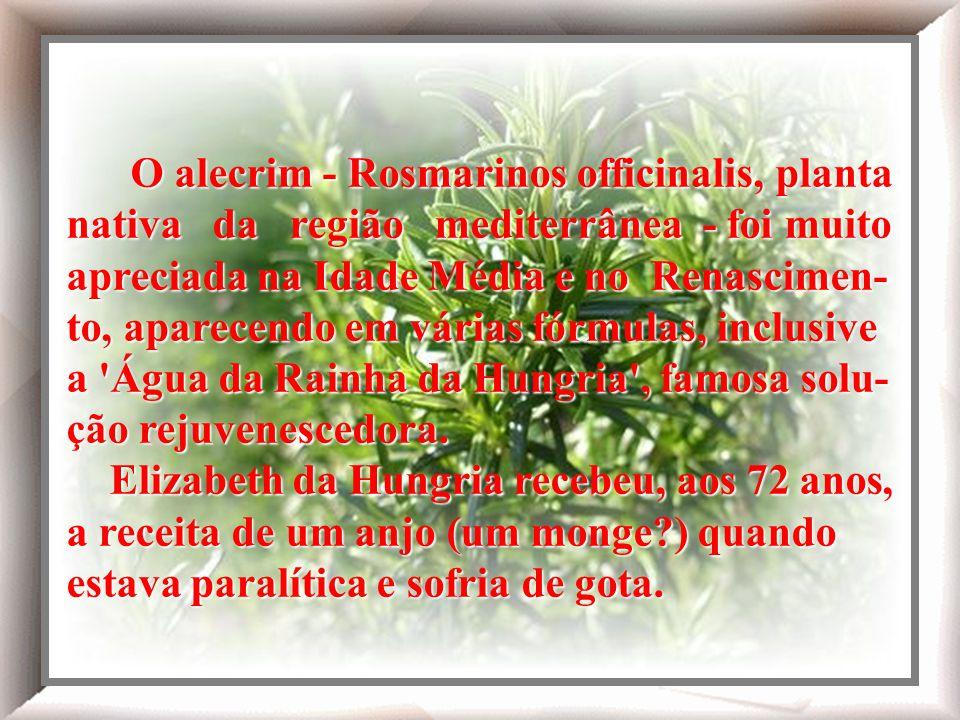 O alecrim - Rosmarinos officinalis, planta nativa da região mediterrânea - foi muito apreciada na Idade Média e no Renascimen-