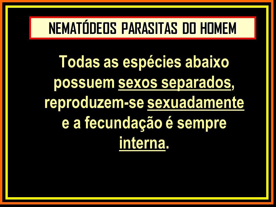 NEMATÓDEOS PARASITAS DO HOMEM