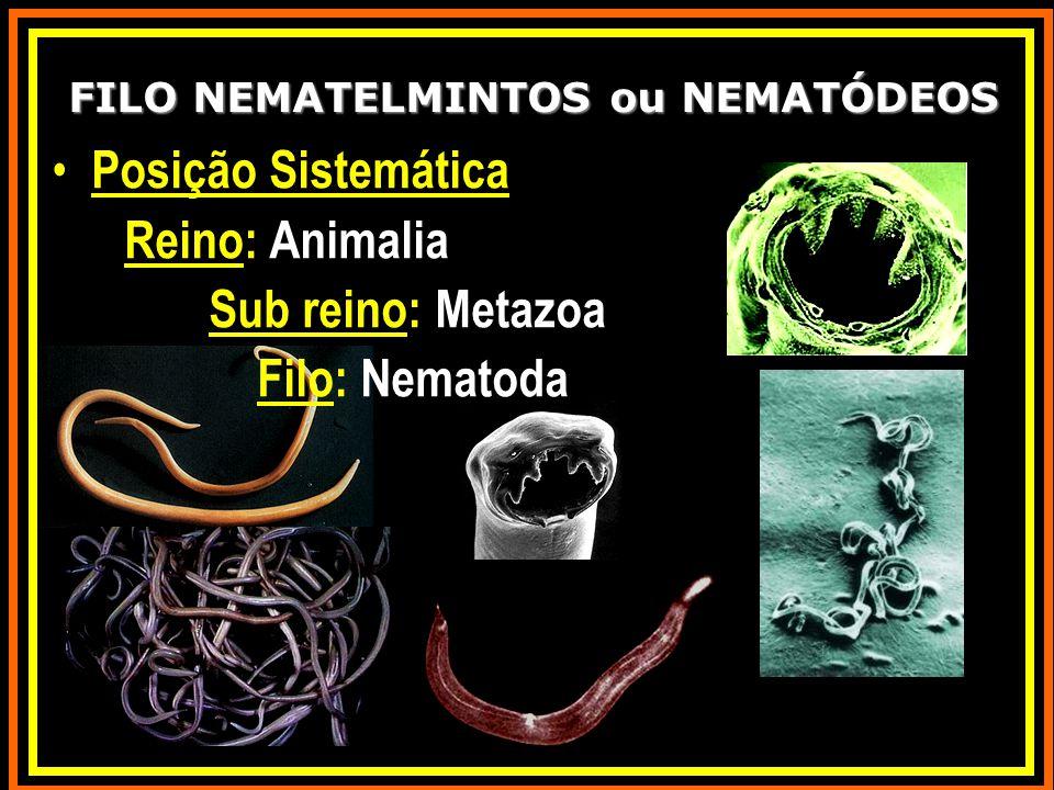 Posição Sistemática Reino: Animalia Sub reino: Metazoa Filo: Nematoda