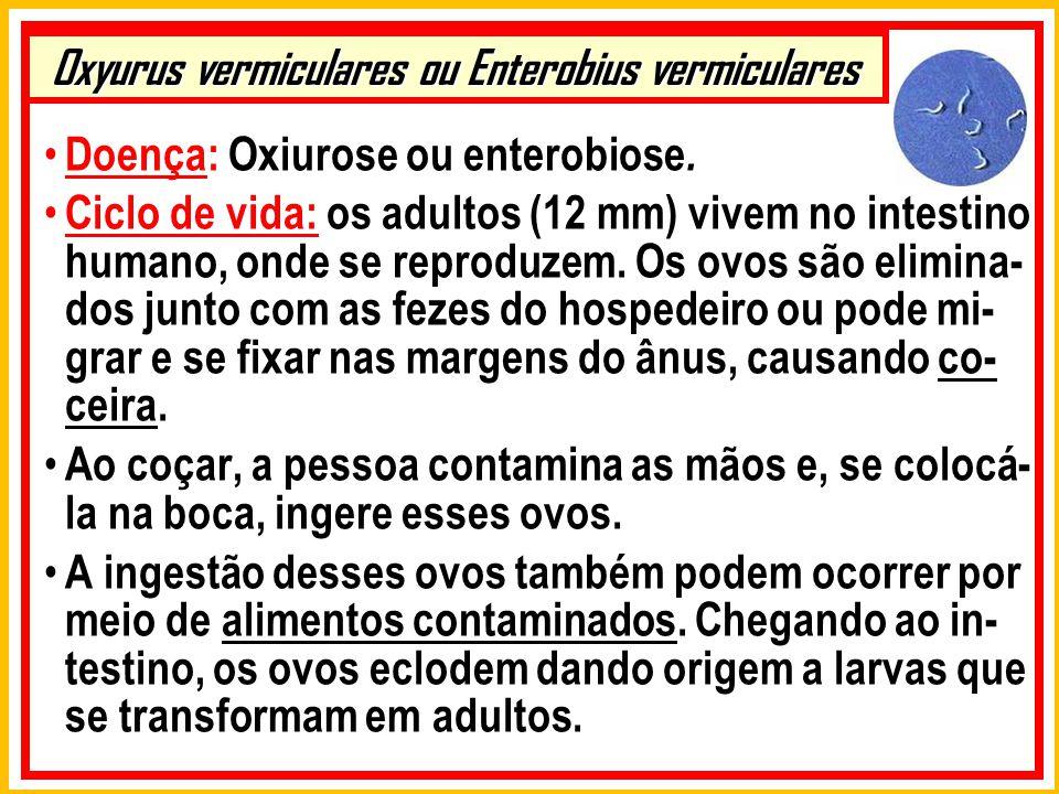 Oxyurus vermiculares ou Enterobius vermiculares