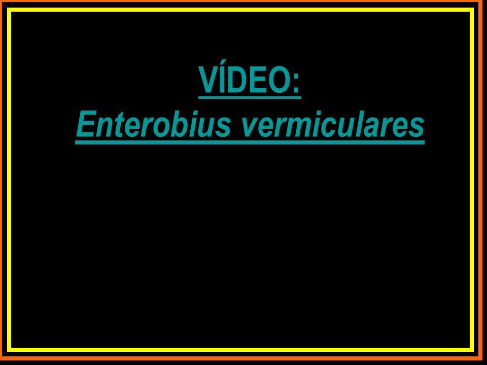 VÍDEO: Enterobius vermiculares
