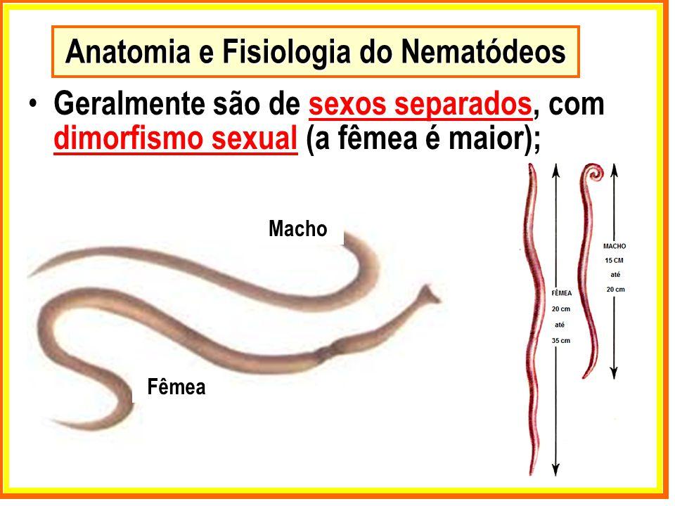 Anatomia e Fisiologia do Nematódeos