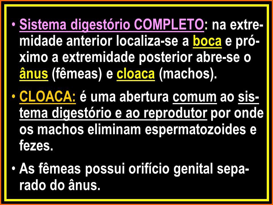 Sistema digestório COMPLETO: na extre- midade anterior localiza-se a boca e pró- ximo a extremidade posterior abre-se o ânus (fêmeas) e cloaca (machos).