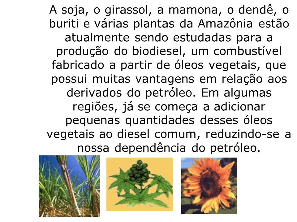 A soja, o girassol, a mamona, o dendê, o buriti e várias plantas da Amazônia estão atualmente sendo estudadas para a produção do biodiesel, um combustível fabricado a partir de óleos vegetais, que possui muitas vantagens em relação aos derivados do petróleo.