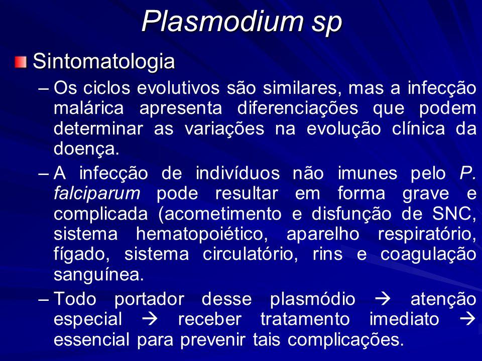Plasmodium sp Sintomatologia