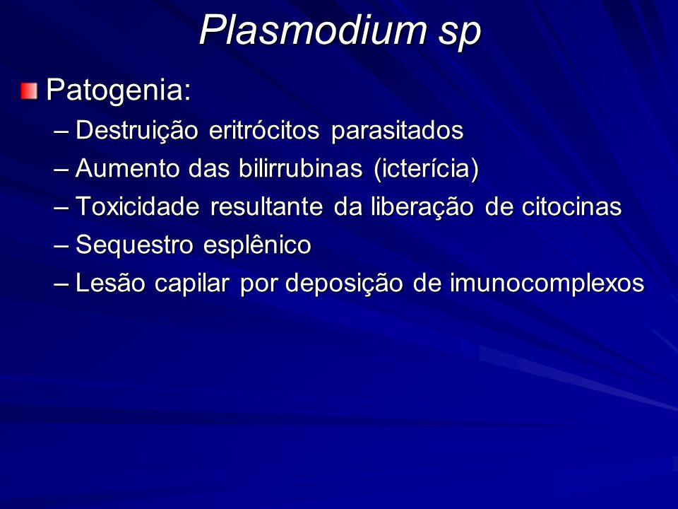 Plasmodium sp Patogenia: Destruição eritrócitos parasitados