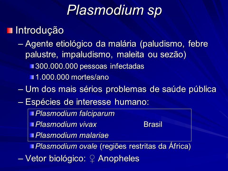 Plasmodium sp Introdução