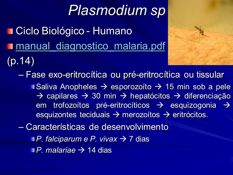 Plasmodium sp Ciclo Biológico - Humano manual_diagnostico_malaria.pdf