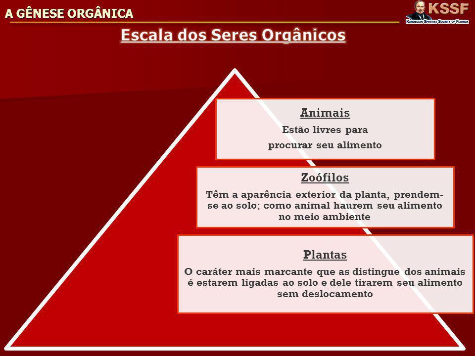 Escala dos Seres Orgânicos