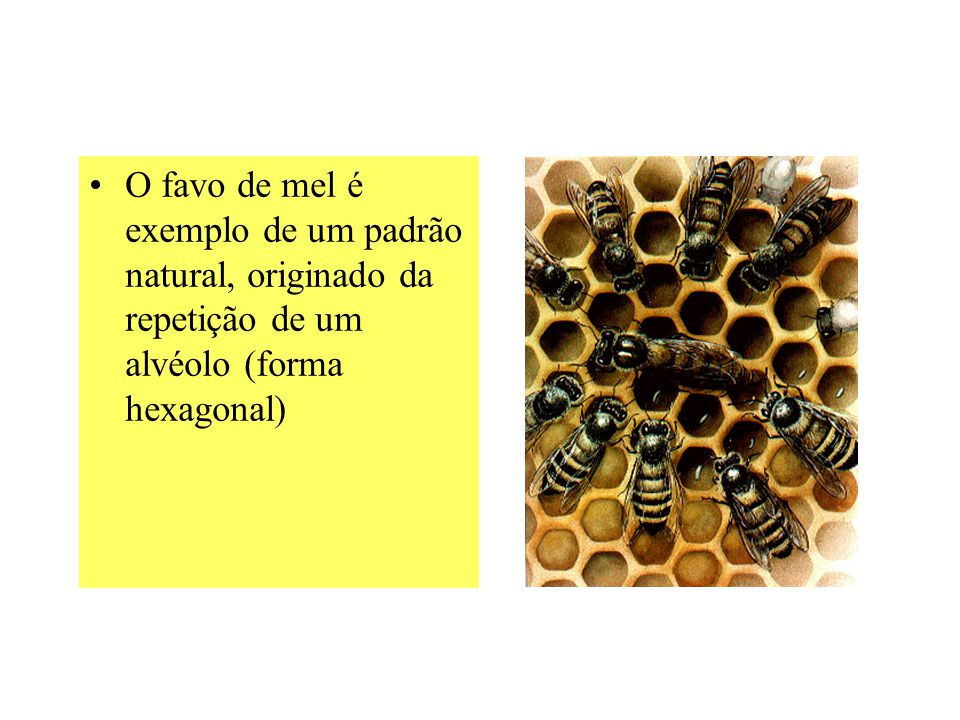 O favo de mel é exemplo de um padrão natural, originado da repetição de um alvéolo (forma hexagonal)