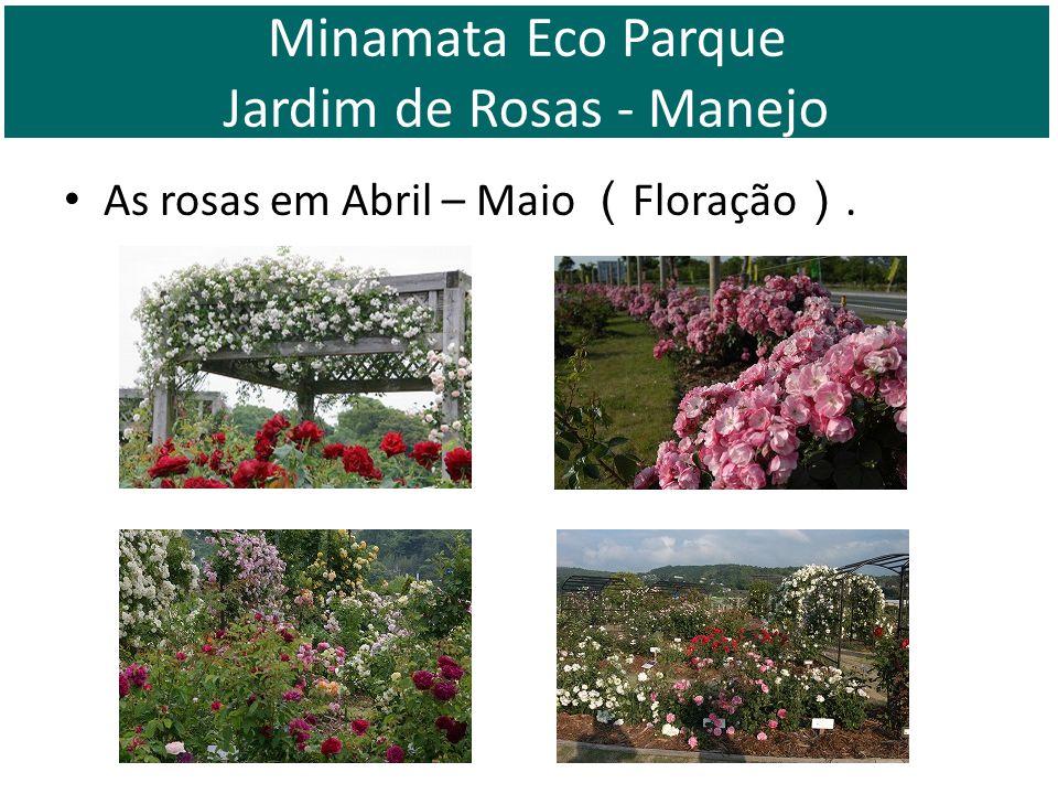 Minamata Eco Parque Jardim de Rosas - Manejo