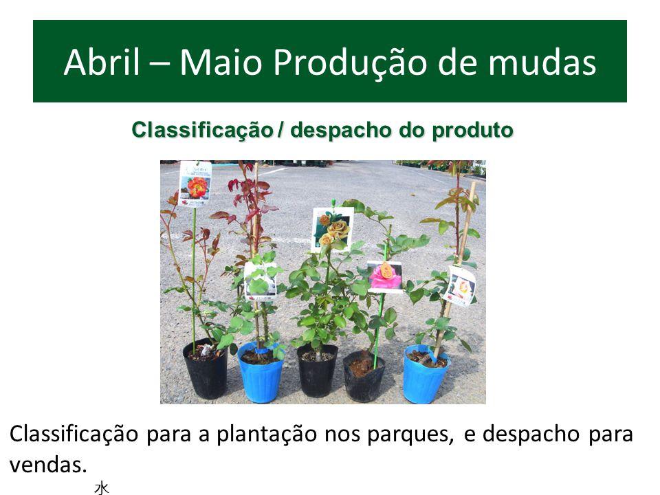 Classificação / despacho do produto