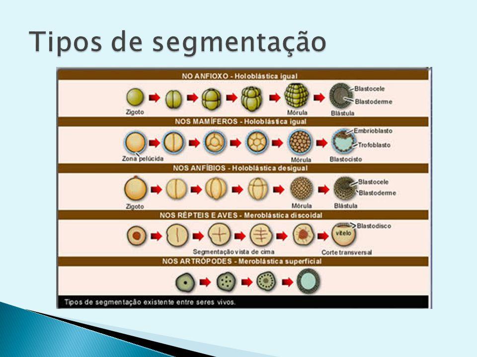 Tipos de segmentação