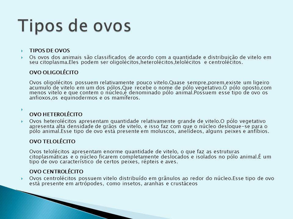 Tipos de ovos TIPOS DE OVOS
