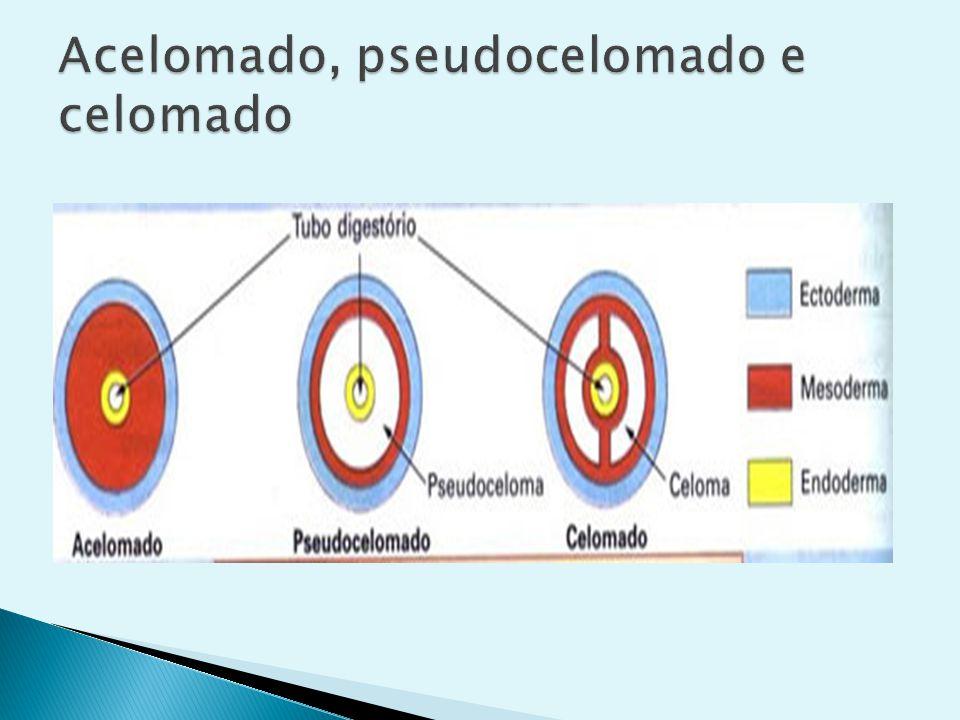 Acelomado, pseudocelomado e celomado