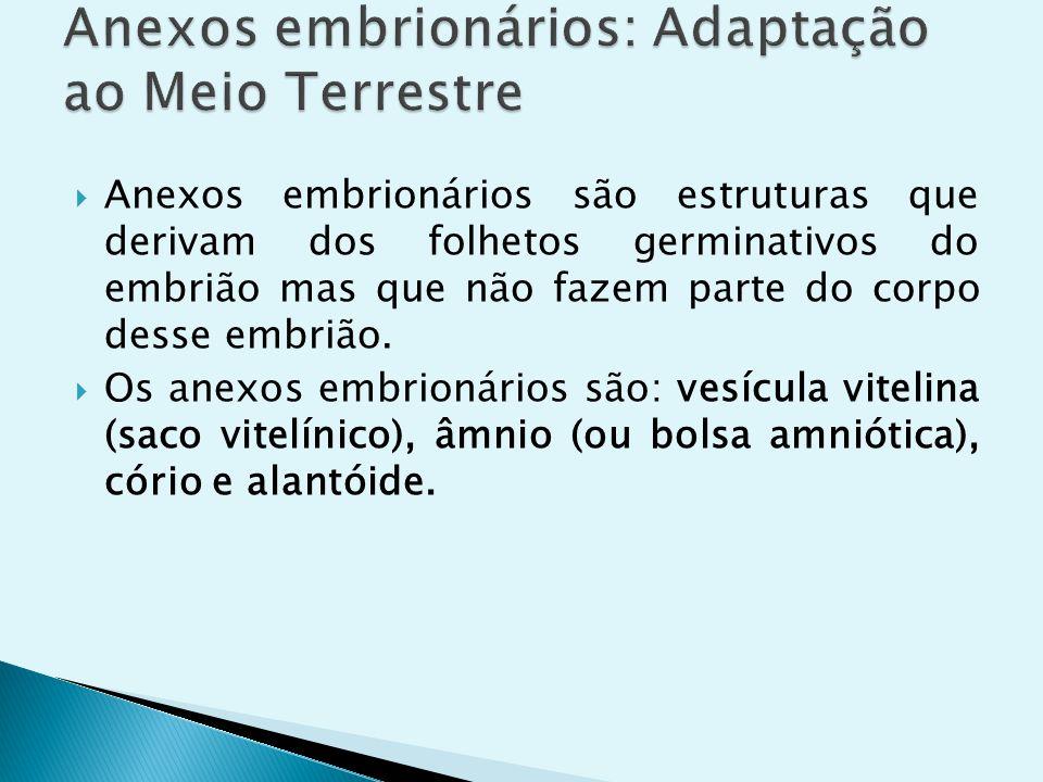 Anexos embrionários: Adaptação ao Meio Terrestre