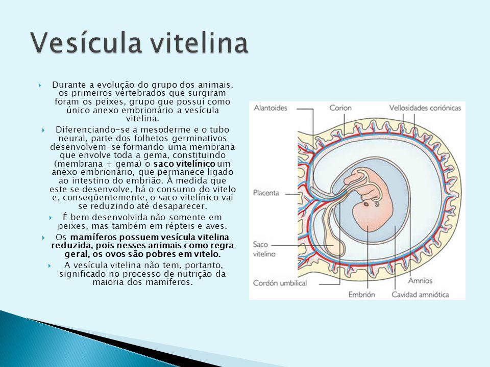 Vesícula vitelina