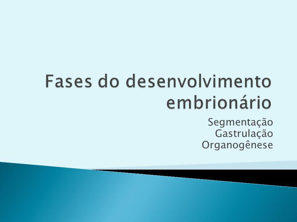 Fases do desenvolvimento embrionário