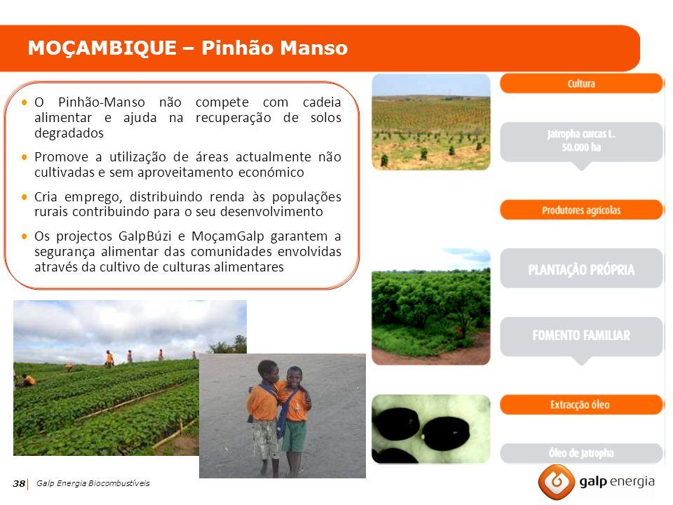 MOÇAMBIQUE – Pinhão Manso