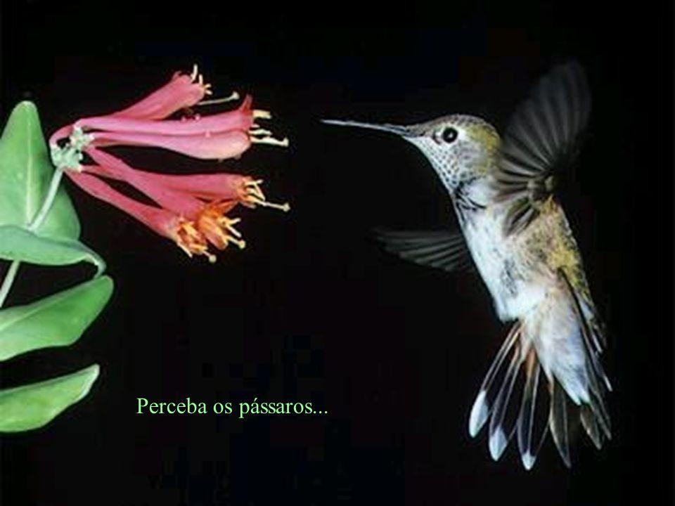 Perceba os pássaros...