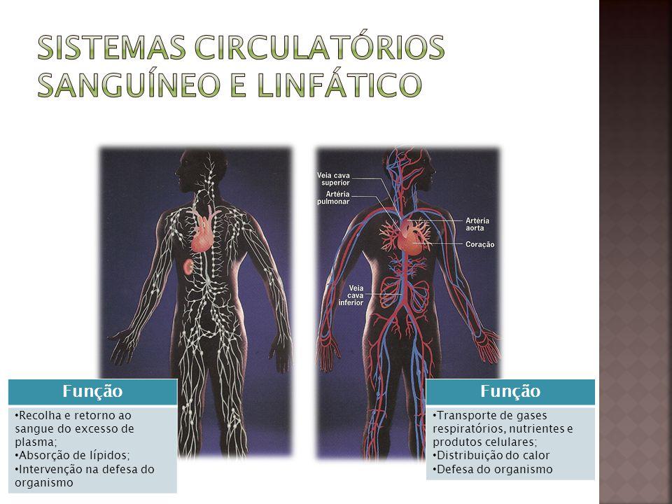 Sistemas circulatórios sanguíneo e linfático