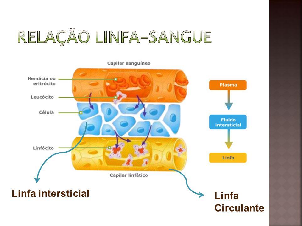 Relação linfa-sangue Linfa intersticial Linfa Circulante