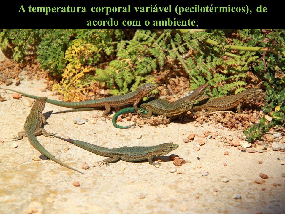 A temperatura corporal variável (pecilotérmicos), de acordo com o ambiente;
