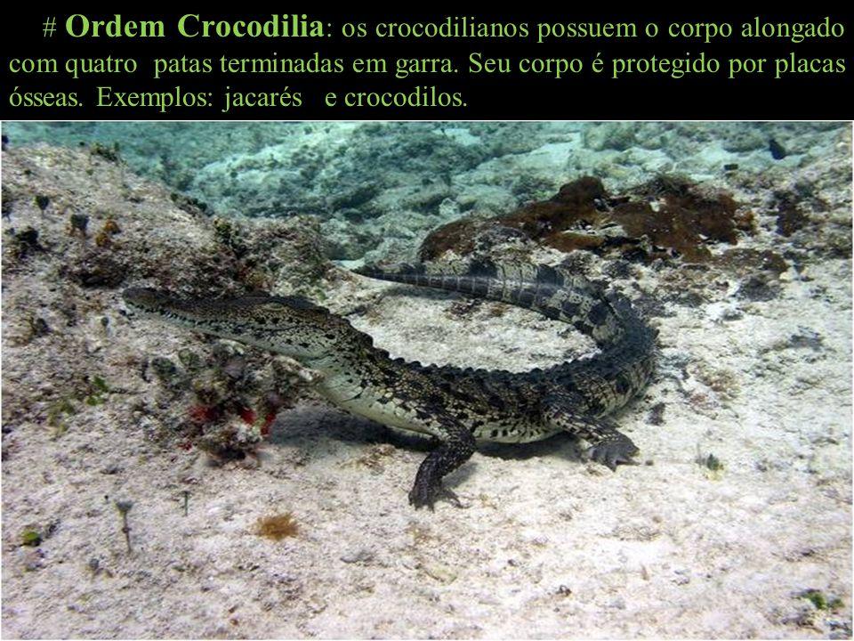 # Ordem Crocodilia: os crocodilianos possuem o corpo alongado com quatro patas terminadas em garra.