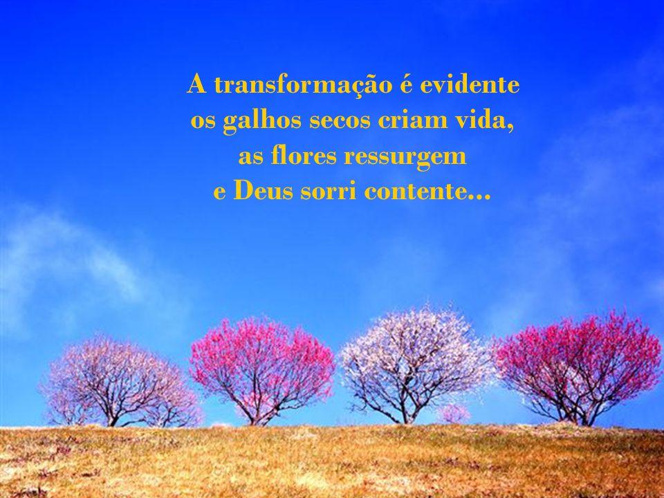 A transformação é evidente os galhos secos criam vida,