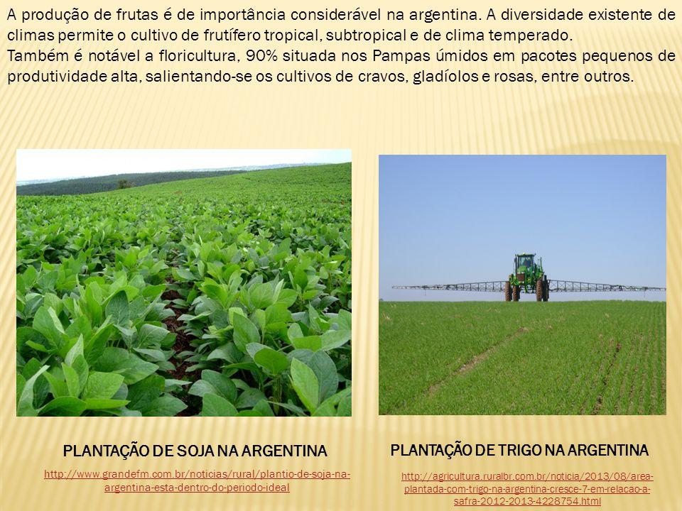 PLANTAÇÃO DE SOJA NA ARGENTINA PLANTAÇÃO DE TRIGO NA ARGENTINA